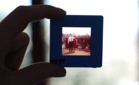 Eigene Wurzeln entdecken: Nahaufnahme eines alten Dias vors Licht gehalten. Zu sehen ist ein Ehepaar auf einer Wiese. Oft stehen alte Fotos am Anfang der Ahnenforschung. Wer seine Familiengeschichte kennt, weiß, welche Ideen und Werte er weitergeben möchte. In Prinzip Apfelbaum. Magazin über das, was bleibt.