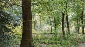 Ruhe unter Bäumen: Baum in einem Friedwald, eine gelbe Schleife um den Stamm kennzeichnet ein freies Grab. Die Natur ist tröstender Erinnerungsort und Grabpfleger zu gleich. Was es bei Naturbestattungen zu beachten gibt steht in diesem Ratgeber. In: Prinzip Apfelbaum. Magazin über das, was bleibt. Foto: FriedWald