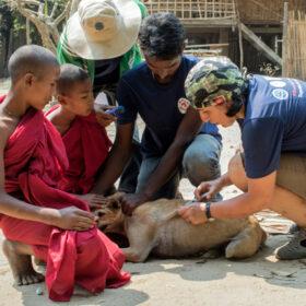 Das tut gut: Zwei Mitarbeiter von VIER PFOTEN impfen einen Hund, daneben zwei junge buddhistische Mönche. Die Streuner-Impfaktion bewahrt Tiere in Myanmar vor Massentötungen. VIER PFOTEN ist Mitglied der Initiative