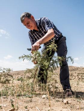 Das tut gut: World Vision-Agrarexperte Tony Rinaudo beim Pflanzen eines Baumes in der Wüste. Für sein Engagement erhielt er den Alternativen Nobelpreis 2018. World Vision ist Mitglied der Initiative