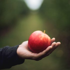 Vermächtnis: Ein roter Apfel liegt in einer Hand, im Hintergrund unscharfes Grün. Symbolbild: Per Testamentsspende lässt sich auch mit kleinen Beträgen mit dem Erbe Gutes tun. Darauf sollte man achten. In: Prinzip Apfelbaum. Magazin über das, was bleibt. Foto: Kari Shea on Unsplash