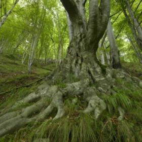 Das tut gut: Buchenurwälder in Rumänien gehören zum Unesco-Welterbe. Nach einer Beschwerde von EuroNatur hat die EU-Kommission ein Vertragsverletzungsverfahren gegen Rumänien eingeleitet. EuroNatur ist Mitglied der Initiative