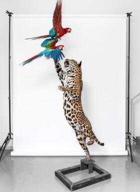 Bewahren für die Zukunft: Ein im Sprung nach einem Ara jagender Jaguar, Präparate des Museums für Naturkunde Berlin. Das Museum bewahrt eine Sammlung von über 30 Millionen Objekten und ist zugleich ein Ort, um die Zukunft auszuhandeln. Im Gespräch mit Direktor Johannes Vogel. In: Prinzip Apfelbaum. Magazin über das, was bleibt. Foto: Carola Radke/MfN