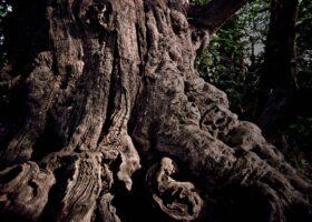 Die Edelkastanie in Sant'Alfio auf Sizilien ist 4000 Jahre alt. Wie Wurzeln geben uns unsere Erfahrungen halt. Wie können wir sie weitergeben?