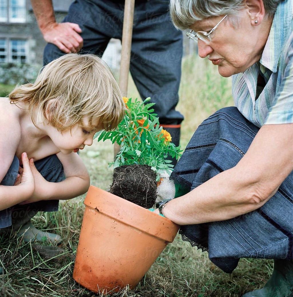 Oma und Enkel pflanzen Blumen. Wissen weitergeben, von Älteren lernen