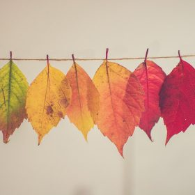 Buntes Laub nach Farbe sortiert: die letzten Dinge ordnen, ein Testament machen, gemeinnützig vererben.