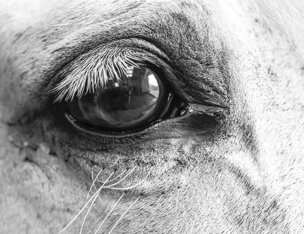 Auge eines Pferdes: sich verbunden fühlen, Mitgefühl zeigen und gemeinnützig vererben