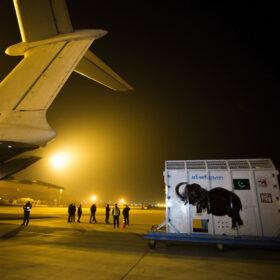 Transport von Elefant Kaavan nach Kambodscha – finanziert durch Spenden.
